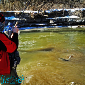 Live 2 Fish Ice out Steel in... Articles Daniel Notarianni River Fishing