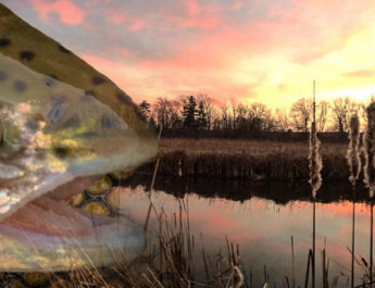 Top Five Lures To Pack To Fish The River